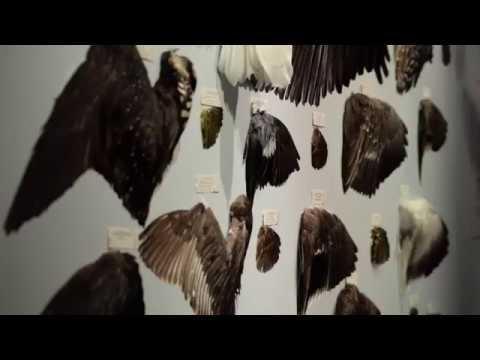 Instinct Extinct: |The Great Pacific Flyway|Now Through Nov. 19